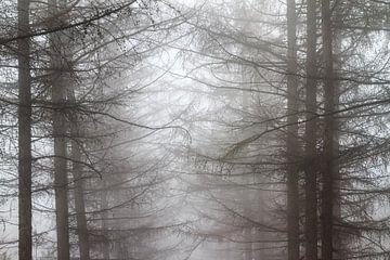 Mistige takken in het bos van Dennis van de Water