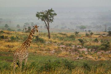 Giraffe op de savanne  van Geke Woudstra