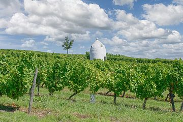 Trullo in het Rheinhessense wijnbouwgebied van Peter Eckert