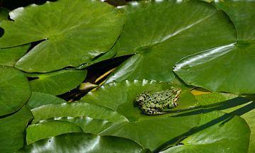 Een groene kikker op een blad van Ulrike Leone