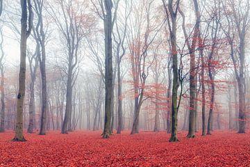 Rode herfst van