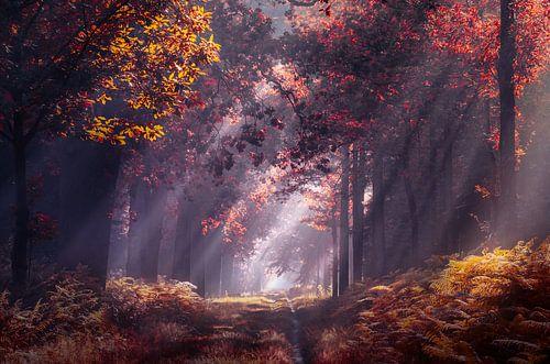 Zonnestralen in het herfst bos