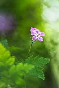 Greenness van Bob Daalder