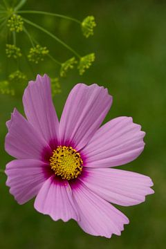 Roze bloem in het groen van Jani Moerlands