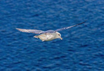 Vlucht boven de zee bij Fair Isle van Merijn Loch