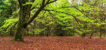 Lente boom van Fotografie Egmond