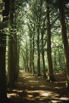 Wandel door de bomenlaan van Winfred van den Bor