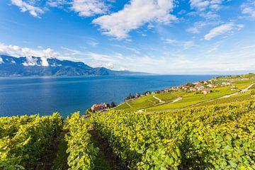 Weinbaugebiet Lavaux bei Rivaz in der Schweiz von Werner Dieterich