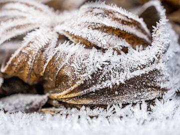 Winter in Saksisch Zwitserland - Ochtendvorst van Pixelwerk