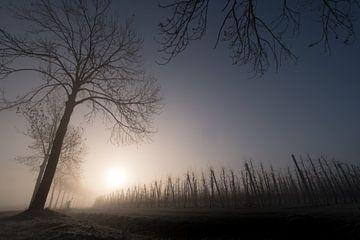 (Fruit)bomen von Moetwil en van Dijk - Fotografie