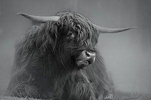 Schottischer Highlander von Erik Spiekman