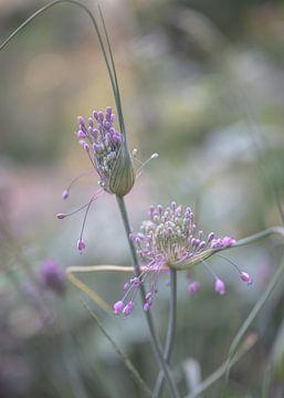 Blumen Teil 171