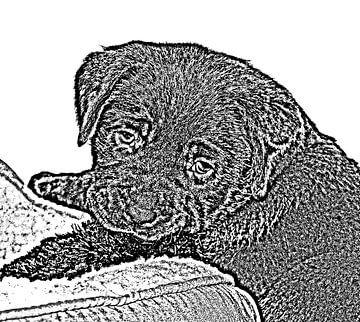 Labrador puppy van Jose Lok