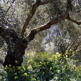 Olijfbomen jungle van jan katuin