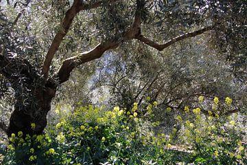 Olivenbäume Dschungel von jan katuin