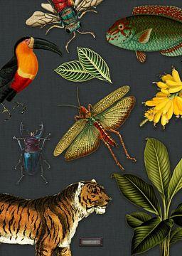 Tropische schoolplaat met vogels, vissen en jungle dieren. sur Studio POPPY