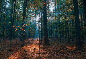 Het exploderende bos