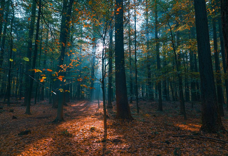 Het exploderende bos van Joris Pannemans - Loris Photography