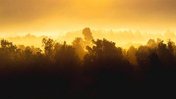 Zonsopgang achter mistige bomen van Patrik Lovrin