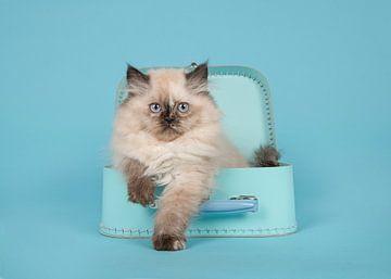 Kitten met blauwe ogen in blauwe koffer von Elles Rijsdijk