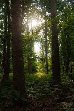 Bomen tegenlicht van Petra van der Werff