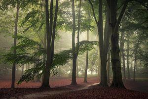 Rust in het bos van