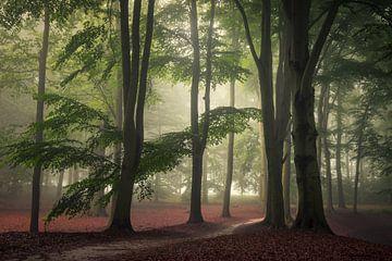 Rust in het bos van Edwin Mooijaart