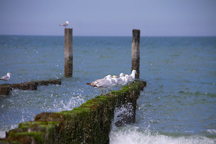 Onrustige zee rustige meeuwen van Marco Leeggangers