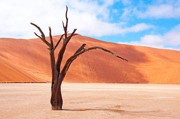 Een boom als kunstobject van Aisja Aalbers