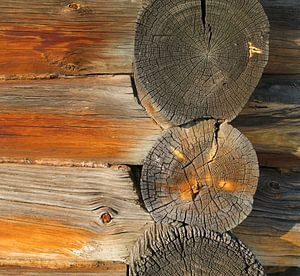 Structuren in hout van Floris den Ouden