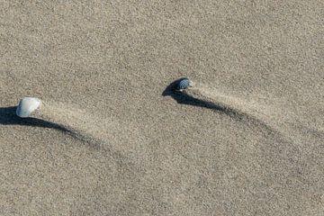 Schelpen op het strand van Arie Jan van Termeij