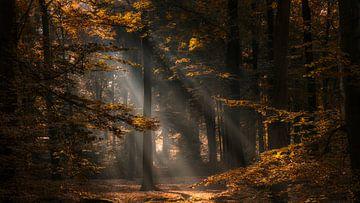 Herfstkleuren en zonnestralen in een bos von Bram van Broekhoven