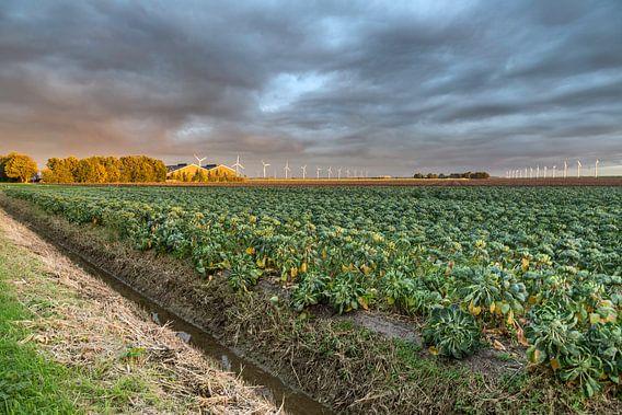 Spruitjesland van Michiel Leegerstee