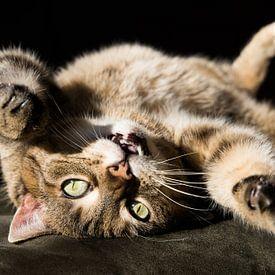Zypressen-Katze von Marieke Funke