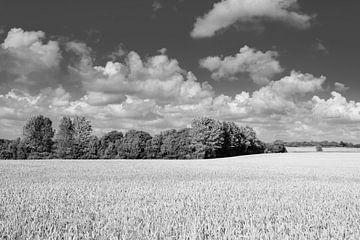 Deens landschap van Danny Taheij