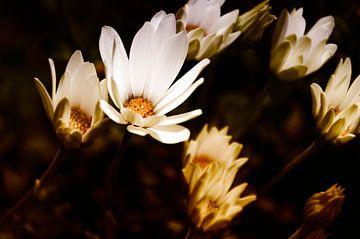 Bloemen van Groinwood Photography