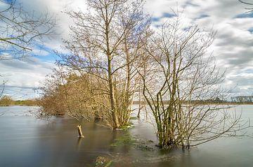 Bäume im Wasser von Mark Bolijn