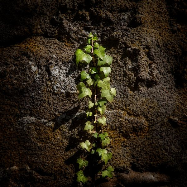 Climbing van Ruud Peters