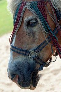 horse with no name van