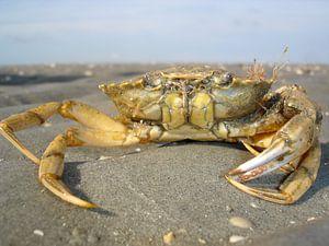 Crab van