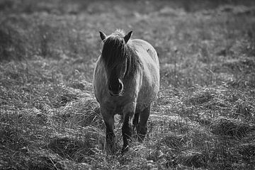 schwarzes und weißes Pferd von Eva De Mol