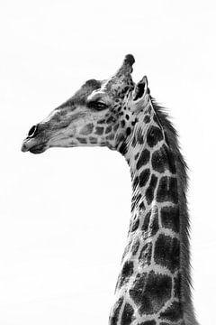 Giraffe im Profil von Samantha Levolger