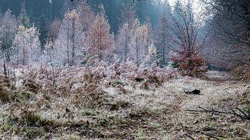 Bevroren bomen van René Groenendijk
