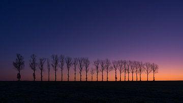 Morgenlicht von Ronny Rohloff