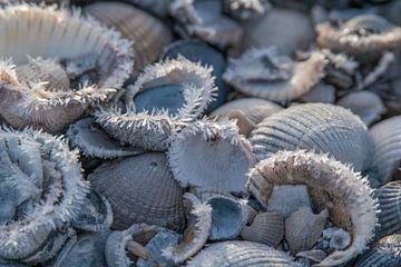 Muscheln nach einem Tag im Frost von Karen de Geus