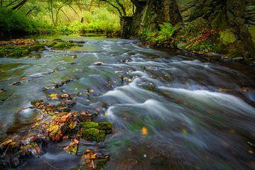 Selva in de herfst van Martin Wasilewski