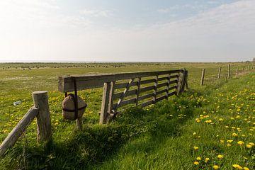 Weiland vol gele paardenbloemen aan de waddenkant van Vlieland van Marijke van Eijkeren