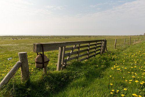 Weiland vol gele paardenbloemen aan de waddenkant van Vlieland
