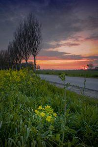 bloem onder zonsondergang van