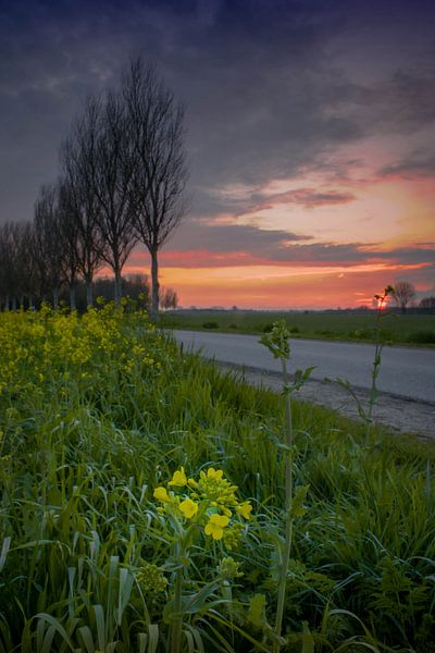bloem onder zonsondergang van Rubin Versigny